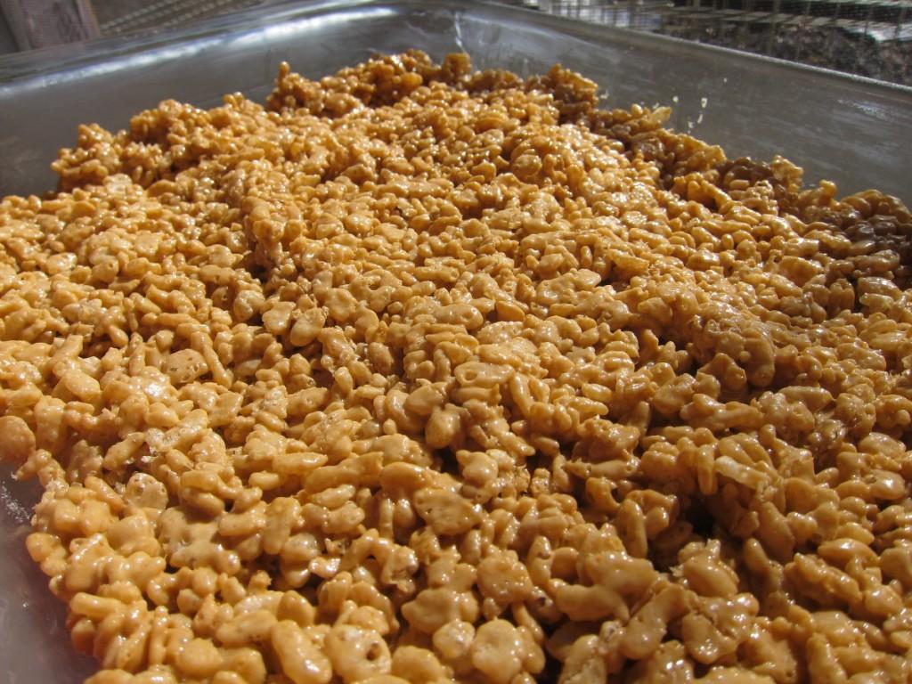 pumpkin spice rice cripsy treats 1