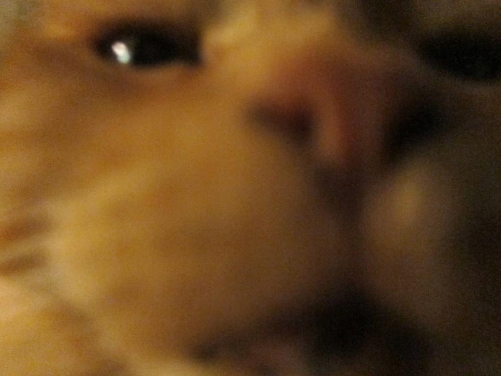 byffys closeup